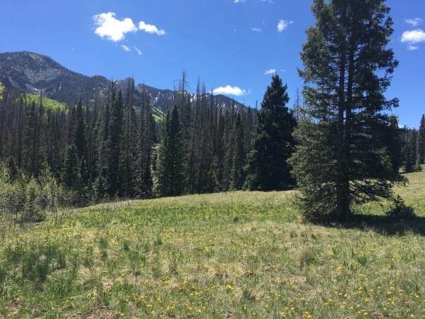 Leche Creek View
